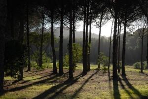 Forêt Porquerolles